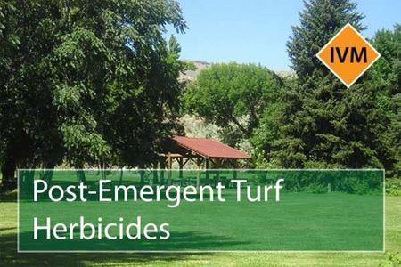 Picture for category Post-Emergent Turf Herbicides